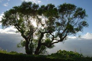 陽光被一棵樹過濾後的美